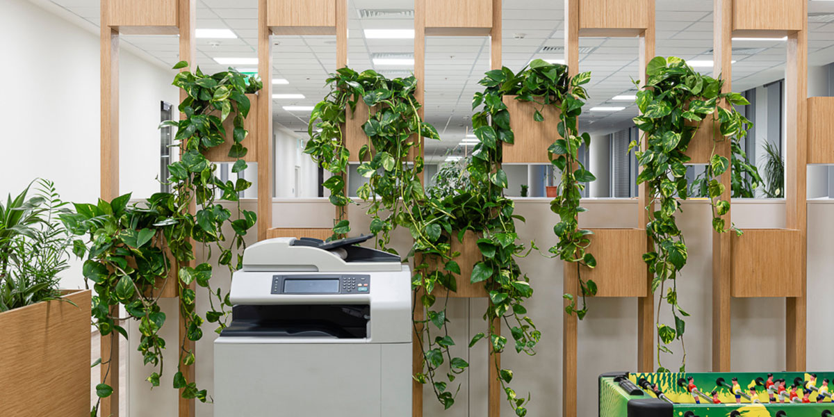 Bring a bit of natural beauty to the office